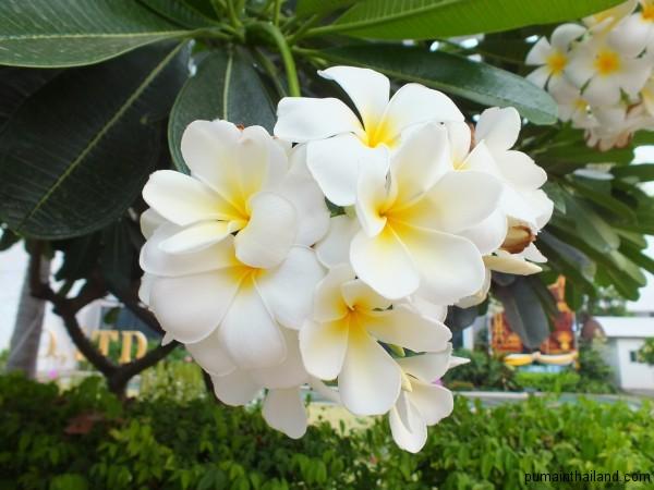 Красивейшие орхидеи из Тайланда