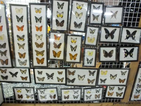 В детстве я коллекционировал бабочек и стрекоз