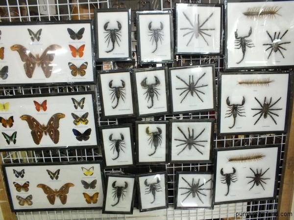 Но сушенные тарантулы и скорпионы мне тоже нравятся