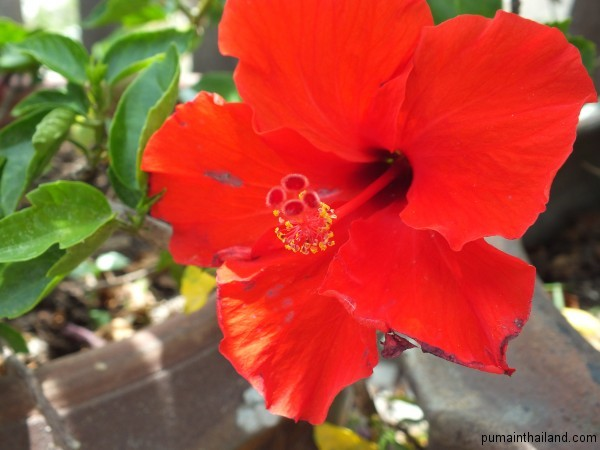 Яркий красный цветок