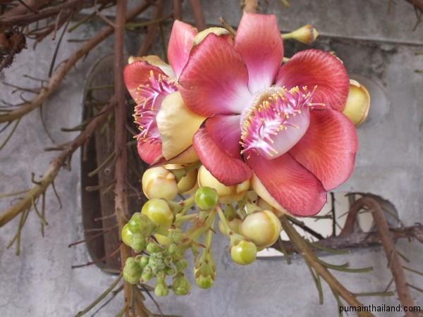 Цветок похожий на пожирателя насекомых