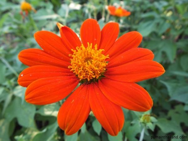 По дороге встретился очень красивый цветок