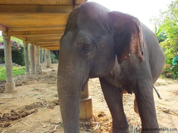 Очень умный слон