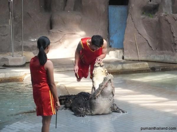 Шоу крокодилов лучшее шоу зоопарка