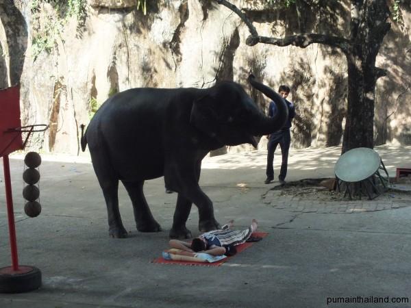 Слон массажист