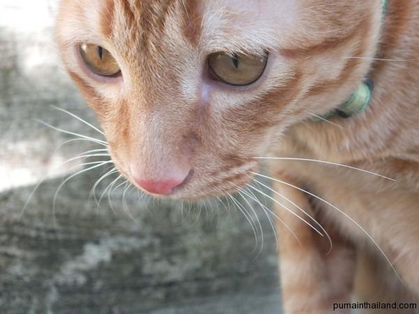 Зоопарковский котик хотел поиграться с крышкой моего фотика