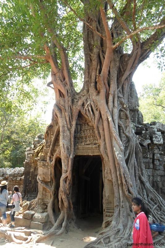 В других храмах тоже много чего интересного, например деревья, растущие на стенах
