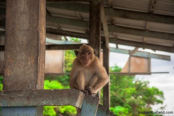 Думающая обезьянка, так рождался человек