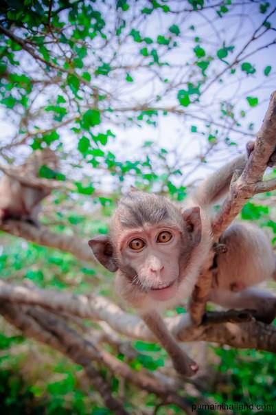 Опасайтесь обезьянок