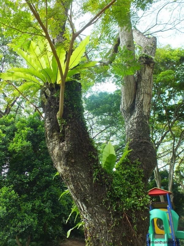 Как и в Тайланде их украшают дополнительной растительностью