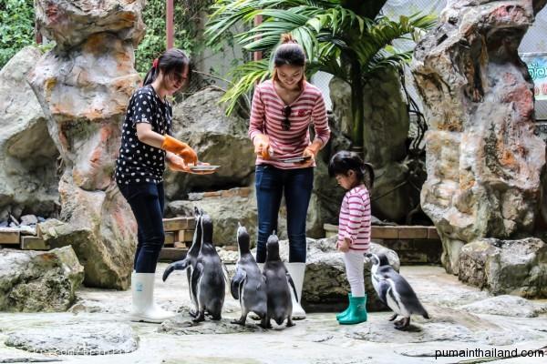 Прикольно кормить пингвинов