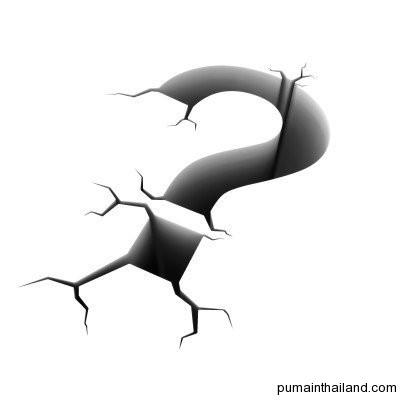 Удиви Пуму своим проницательным вопросом