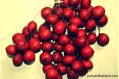 Мафаи бывают оранжевые(более кислые) и красные(более сладкие)